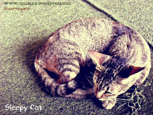 Sleepy Cat 4